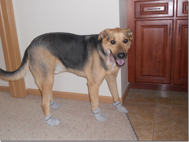 capone in booty socks
