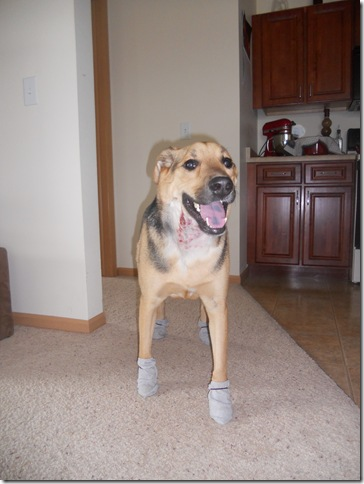 capone walking in socks