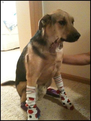 capone in socks