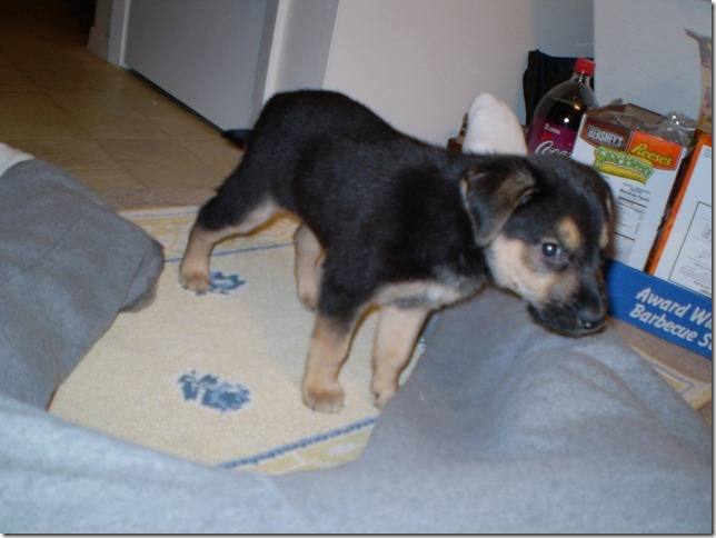 puppy 004